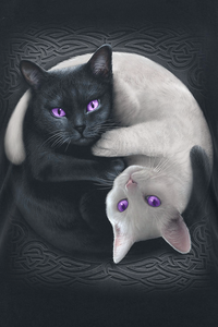 Spiral Yin Yang Cats Top